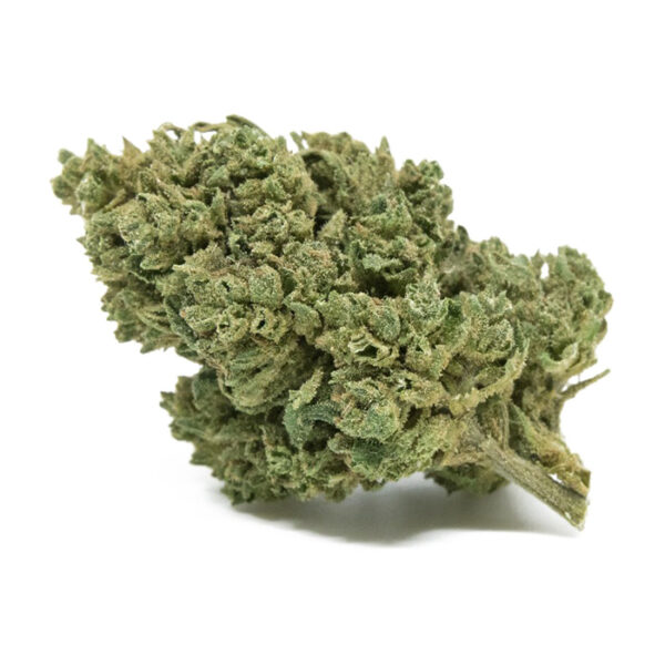 alpina cannabis light ad alto cbd