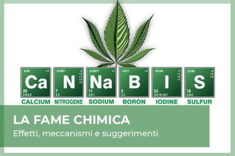 fame chimica marijuana e cannabis light