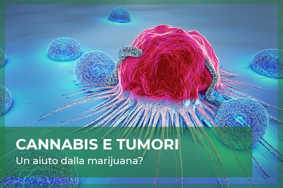 cannabis cura tumori malattie cancro
